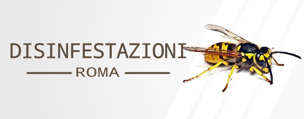 Metri Furio Camillo - Servizio di Disinfestazione Calabroni a Metri Furio Camillo.
