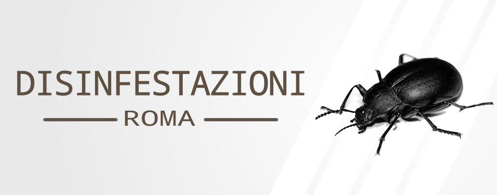 Metri Furio Camillo - Servizio di Disinfestazione Scarafaggi a Metri Furio Camillo.