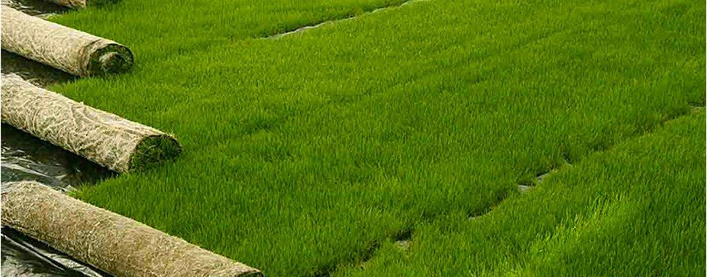 Mentana - Giardinieri: manto erboso a Mentana